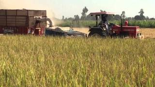 Swaraj 855 with straw reaper and paddy chopper