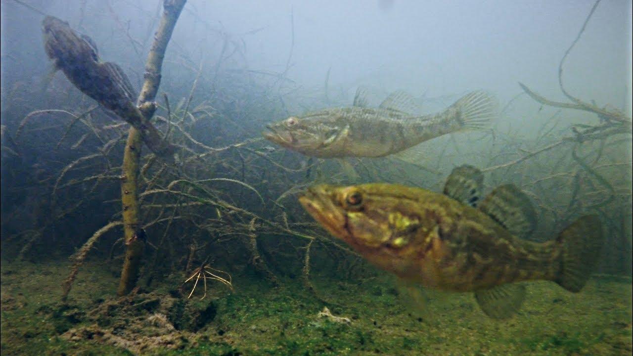 ТОП 10 ЛУЧШИЕ АТАКИ ХИЩНИКА НА ЧЕРВЯ! Рыбалка на Ротана Подводная съемка