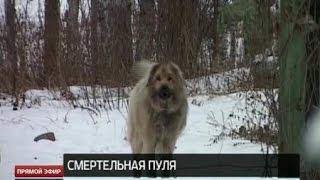 В Нижнем Тагиле жертвами догхантеров стали две домашние собаки