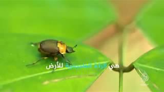 عالم بدون غابات (برومو) الثلاثاء 06 نوفمبر - 22 مكة المكرمة
