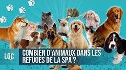 LQC - Combien d'animaux dans les refuges SPA d'Île-de-France ?