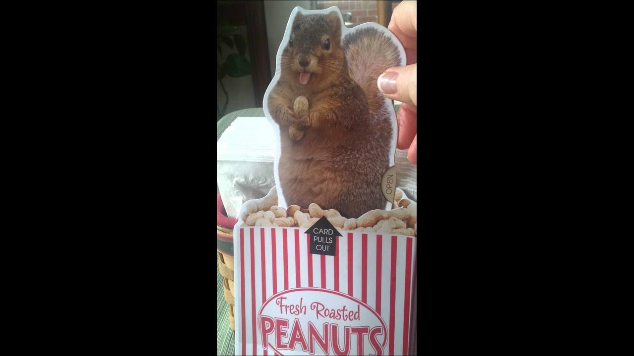 Squirrel Birthday Card Youtube