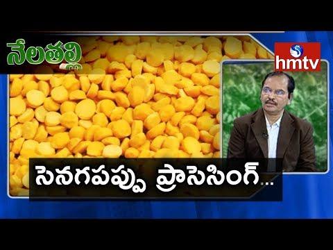 Senaga Pappu(Bengal Gram) Processing Guide By Mynampati Sreenivasa Rao | Nela Talli | Telugu News