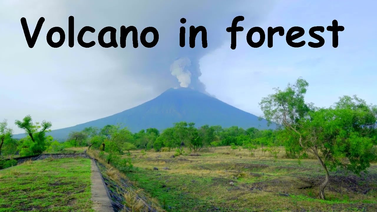 Download 🌋🌾 VOLCANO IN FOREST 8 Hours - Birdsong birds song music - nature sounds lava eruption ambience asmr