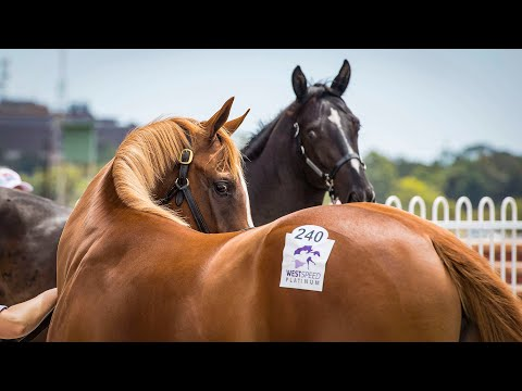 2017 Perth Yearling Sale Day 2