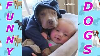 Подборка самых смешных видео с собаками The Funniest dog video compilation ever