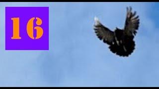 Голуби Крыма, Алексей Василишин, Евпатория (16)(, 2016-11-24T12:00:07.000Z)