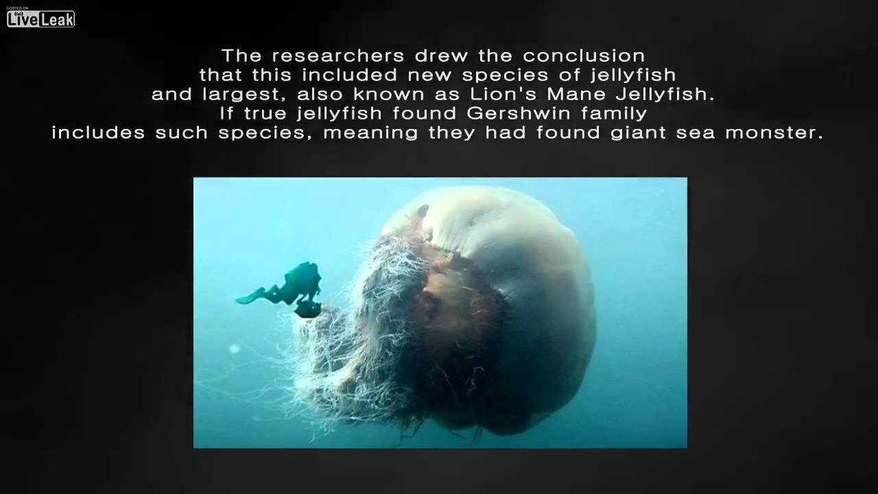 the-discovery-of-a-new-giant-sea-monster