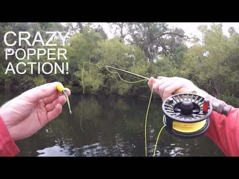 TOPWATER Fly Fishing For Bass With POPPERS!!!