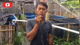 faktor penyebab ikan lele kembung dan upacara masal | sepele tapi bisa fatal