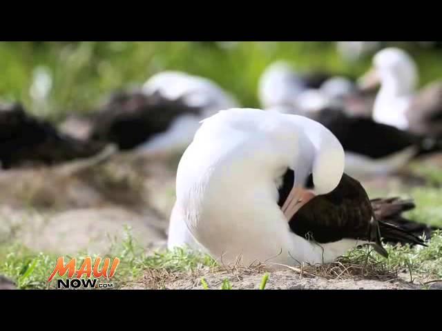 Πόσο μεγάλο είναι το μεγαλύτερο πουλί στον κόσμο μικροσκοπικά γυμνή γκαλερί
