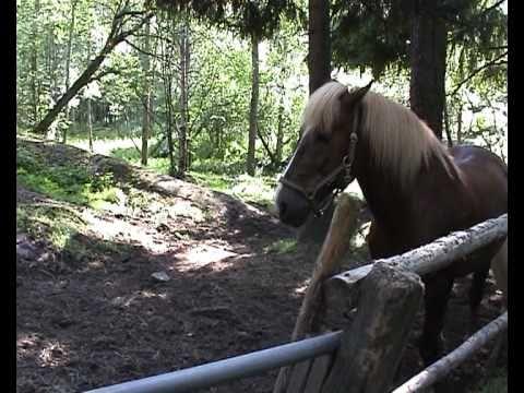 Hevonen traktorikuskina.avi