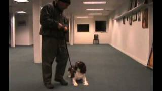 Superdog Dan Training Acadamy Video K-9 Obedience Training, In Cincinnati Oh And Northern Ky