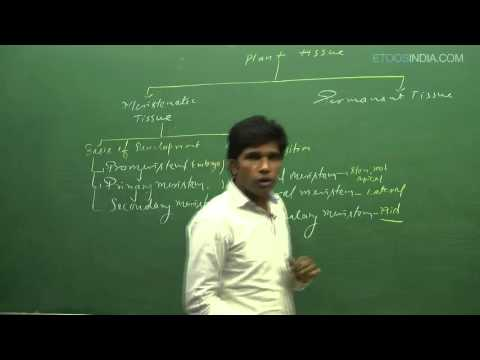 Anatomy of flowering plants- Plant tissue by M. Asad Qureshi(MAQ) Sir (ETOOSINDIA.COM) thumbnail