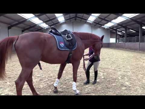 TRT Equestrian Tristan Tucker
