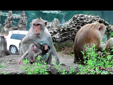 Tarzanna Happy To Walk Around Just Mama from YouTube · Duration:  12 minutes 15 seconds