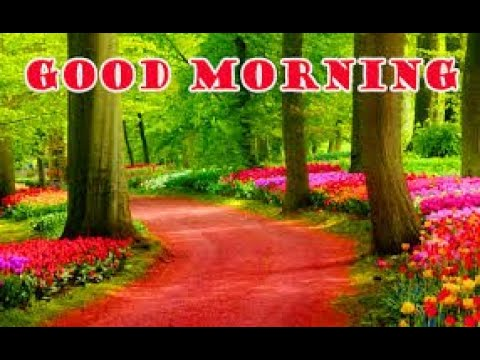 Good Morning Images Whatsapp Status Messages Wishes Quotes Video Fb Status Goodmorning Youtube
