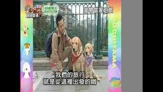 Popular まさお君 & ペット大集合!ポチたま videos