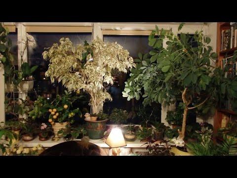 Мои комнатные растения. Комнатные цветы.