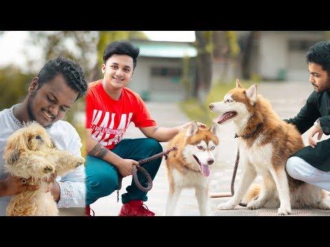 Husky Kennel Bangladesh   Vlog 12   Ahsan Habib Niloy   Ahsan official
