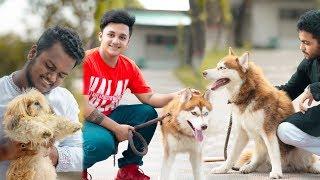 Download Husky Kennel Bangladesh | Vlog 12 | Ahsan Habib Niloy | Ahsan official Mp3 and Videos
