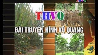Tin Lu Lut Vu Quang