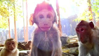 So Cute Baby Janet, Very Lovely Monkey Baby, Lover Animals Life!