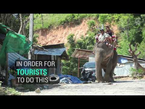 There's A Really Dark Side To Elephant Tourism