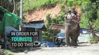 Download Video There's A Really Dark Side To Elephant Tourism MP3 3GP MP4