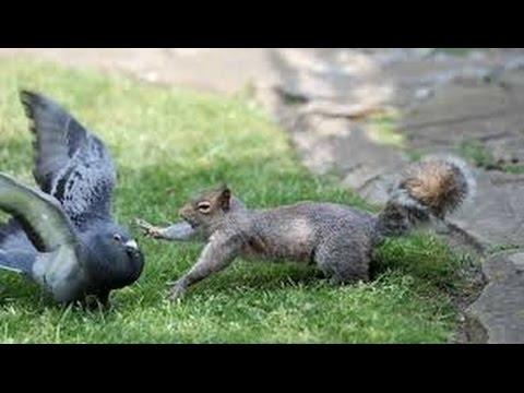 emrakul squirrels