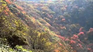 久住の紅葉をと黒岳(高塚山)へ・・・ 男池から歩くのは数年ぶりで雨上...