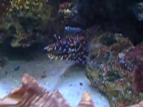 aquarium turkazoo istambul(forum centre)
