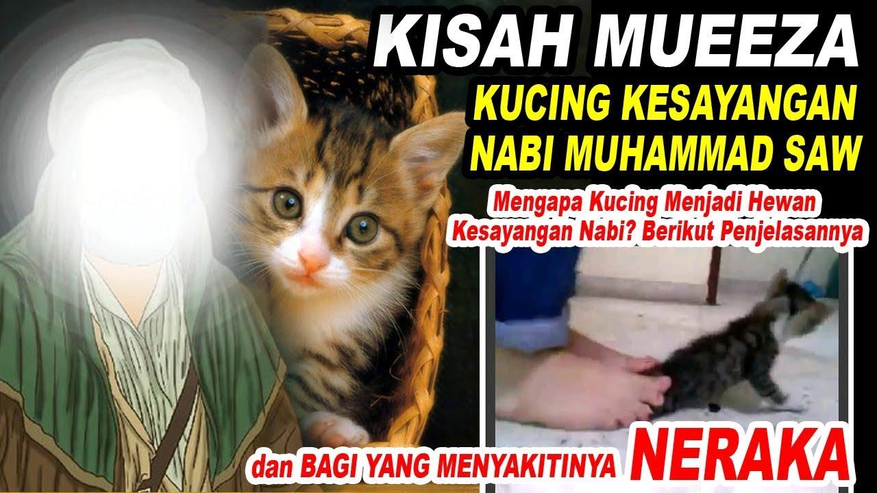 Nabi Muhammad Saw Mueeza Kucing Kesayangannya Apa Hukuman Bagi Yang Menyakitinya Youtube