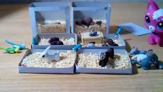 Животные с канала Хомки и Джесс live хома онлайн