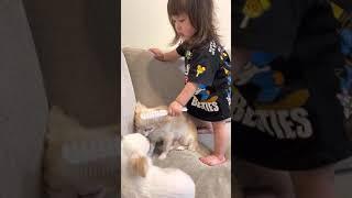 犬のお世話を邪魔したら怒る1歳娘‼︎