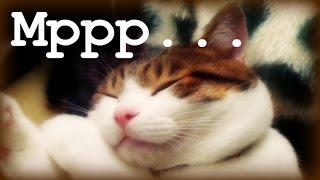 Умиротворяющее Мурлыканье / If you love cats:))))