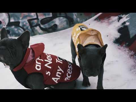 Pawmain Pets Look Book | Hypebeast Dog Streetwear | Pupreme | Hypedog | Pawlenciaga