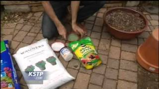 Larry Pfarr Talks Container Gardening Tips
