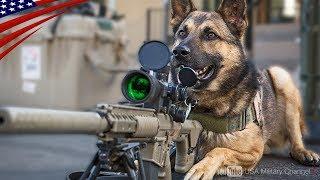 【米軍最恐兵士】軍用犬K-9になるまでのハンドラーと犬の特殊訓練映像