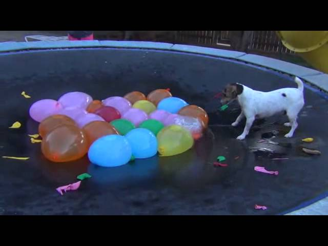 Spaz Attacks Water Balloons–Full Version