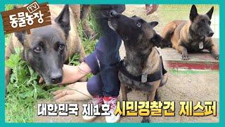 대한민국 최초 '시민 경찰견 1호' 제스퍼★ I TV동물농장 (Animal Farm)   SBS Story