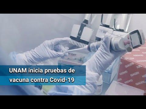 Vacuna de la UNAM contra Covid-19, ya en primera fase de evaluación de animales