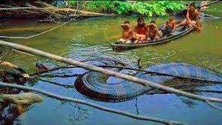 Fishermen Unluckily Goes Into Giant Anaconda's Hunting Land And Takes The Consequence