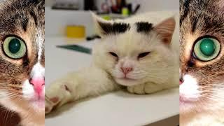 Как ухаживать за глазами кошки