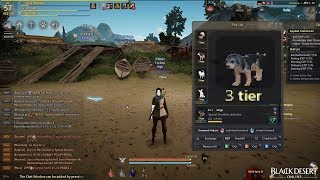 Another Tier 3 One Shot Again! Pet Breeding - Black Desert Online SEA