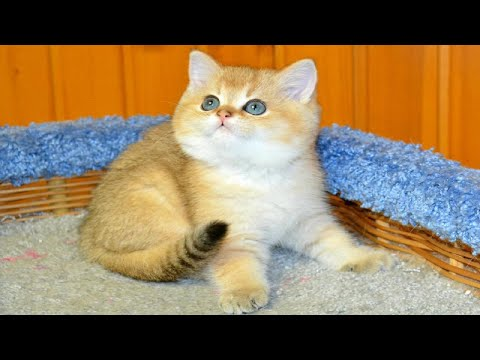 Cute Cat and kittens doing funny thing compilation 2020
