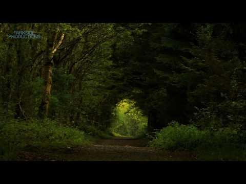 1 Hour Dawn Chorus Bird Song. County Laois, Ireland.