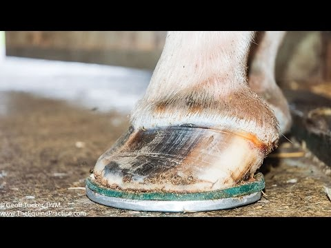 """Laminitis In Horses"" - a HorseTalk™ Webcast of The Horse's Advocate™and Geoff Tucker, DVM"