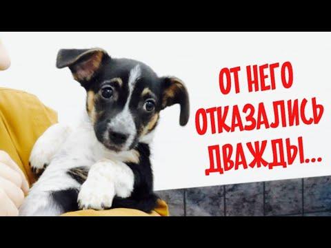 От нашего щенка отказались в Германии. Мы продаем щенков!?
