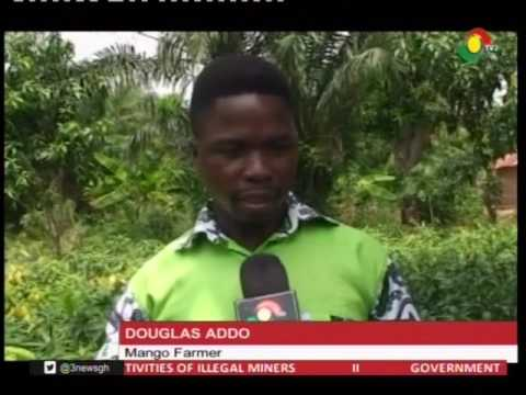 Mango farmers at Somanya call on gov't for support - 19/2/2019